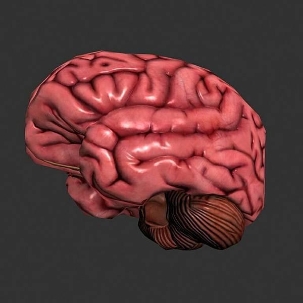 腦袋.jpg