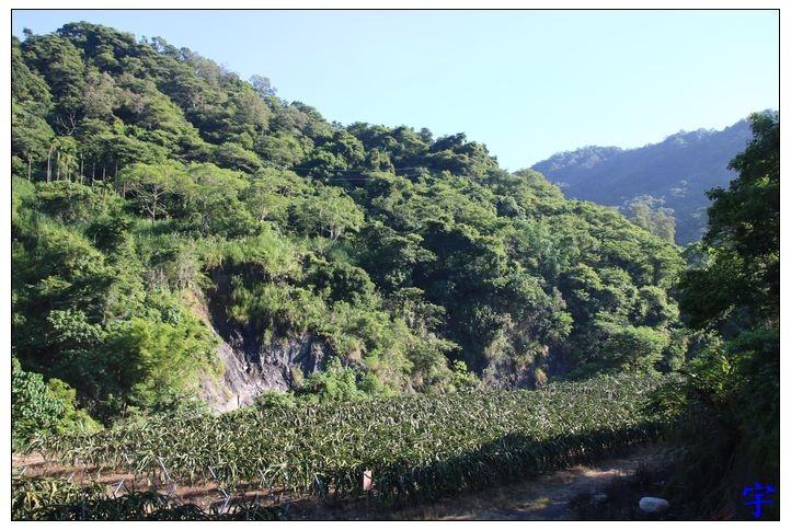 黃金森林 (73).JPG
