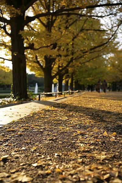 昭和紀念公園9