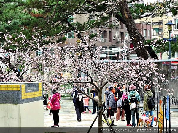106.2.28 新竹公園2.JPG