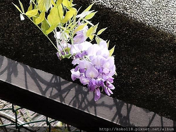 106.4.16 玻工館-紫藤3.JPG