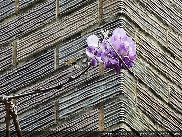 106.4.16 玻工館-紫藤4.JPG
