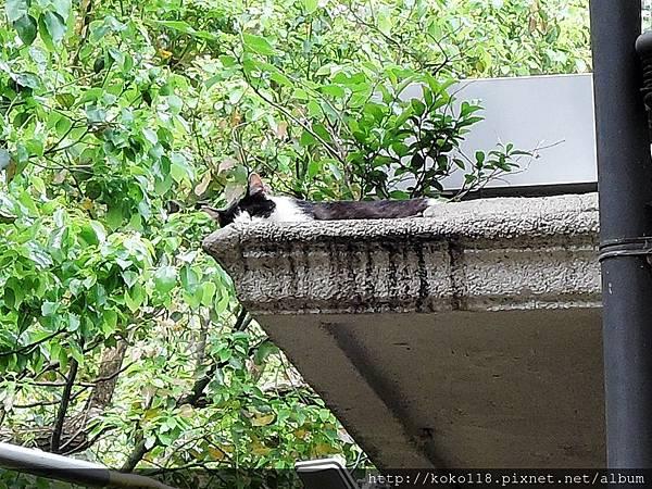106.4.16 新竹公園-屋頂上的貓.JPG