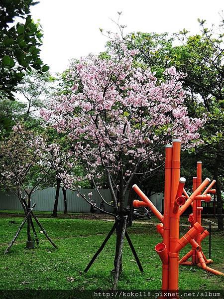 106.4.16 新竹公園-富士櫻.JPG