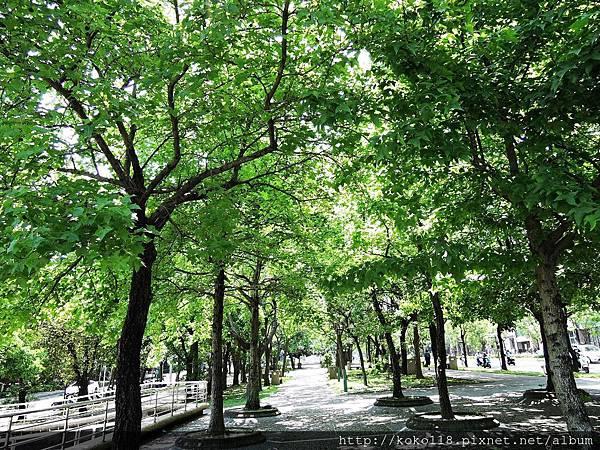 106.4.30 赤土崎公園-楓香.JPG
