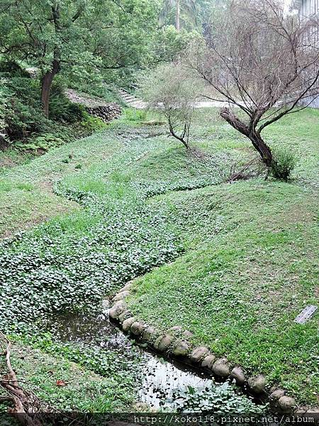 106.5.6 新竹高中-生態池.JPG