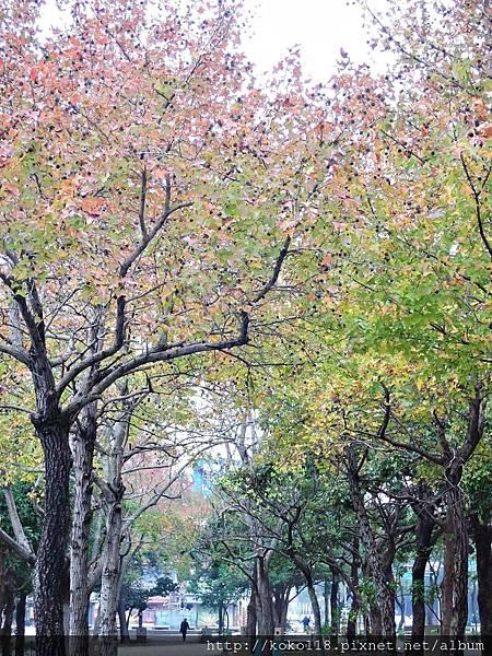 106.12.31 赤土崎公園-楓香1.JPG