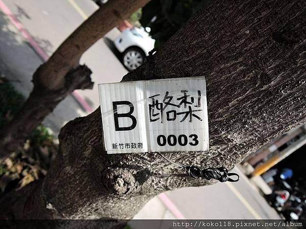 107.4.9 公園里活動中心對面-酪梨名牌.JPG