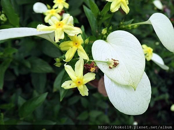 107.7.14 十八尖山-黃萼花.JPG