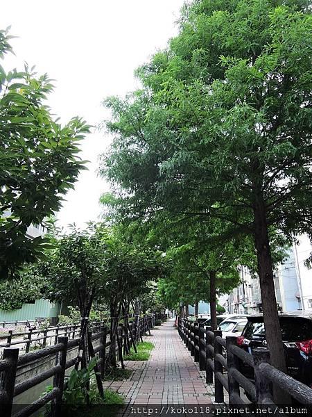 107.7.27 東山濕地生態教學公園外-落羽松步道.JPG