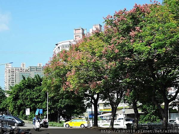 107.10.6 赤土崎公園-台灣欒樹1.JPG