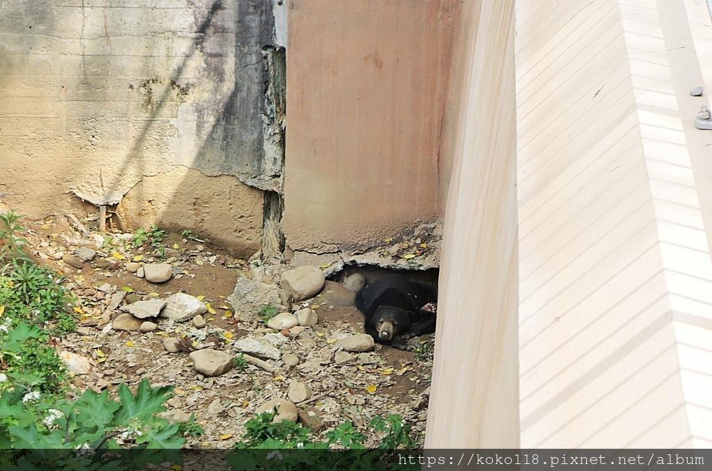 110.3.27 新竹動物園-馬來熊.JPG