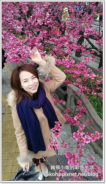 泰安櫻花 (22)