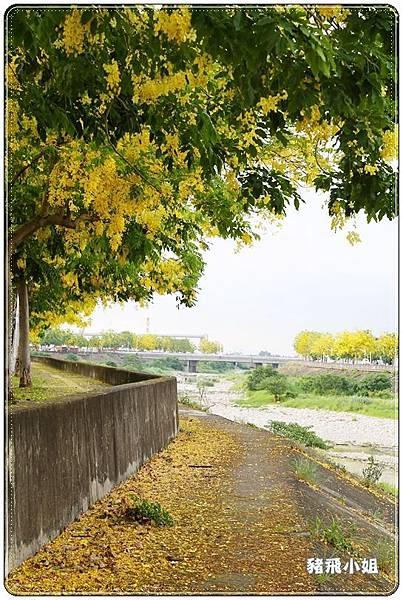 台中‧旱溪阿勃勒 (3).JPG