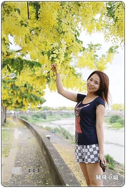 台中‧旱溪阿勃勒 (30).JPG