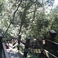 陡峭的木梯