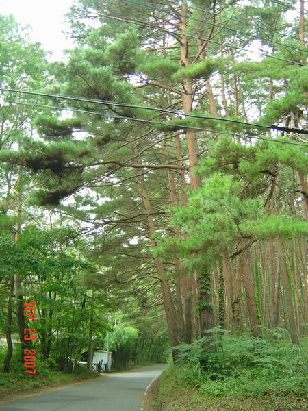 えほん村外的森林