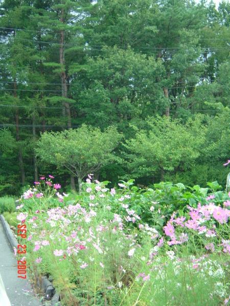 路邊的野花野草