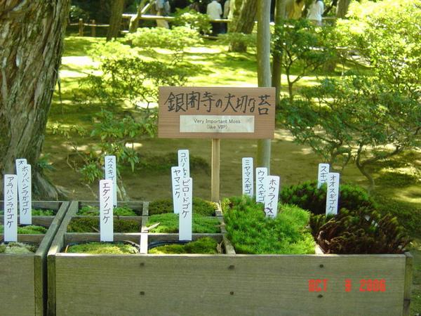銀閣寺 10