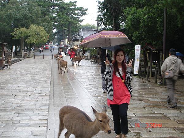 奈良公園裏的鹿群
