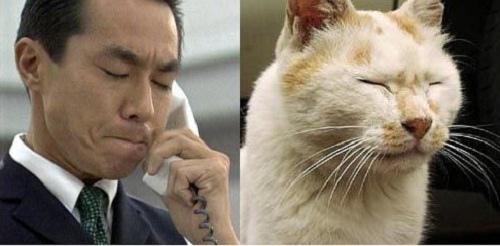 柳葉敏郎跟貓
