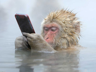 日本猴溫泉玩手機