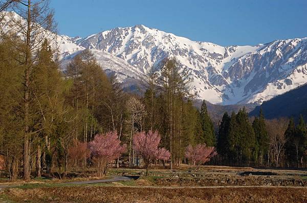 白馬村2015春景色