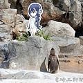 """けもフレに""""恋する""""ペンギン"""