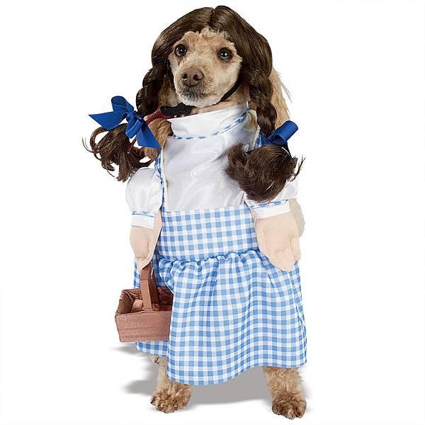 犬用ハロウィンのコスプレ171108