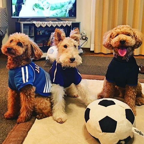サッカー犬180619