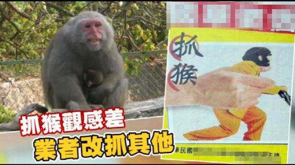 抓猴.jpg