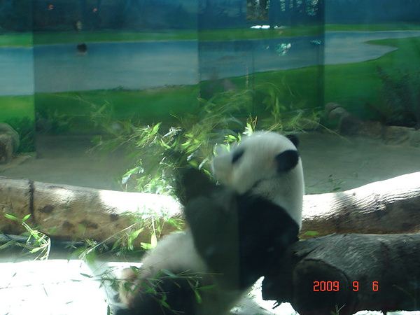 2009年9月台北動物園+阜杭豆漿+魚心+新竹新大同 018