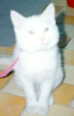 Bobo kitten.bmp