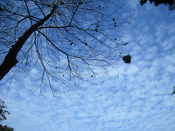 仙跡岩的天空