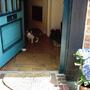 我跟這隻貓溝通很久~~ 她堅持要看門