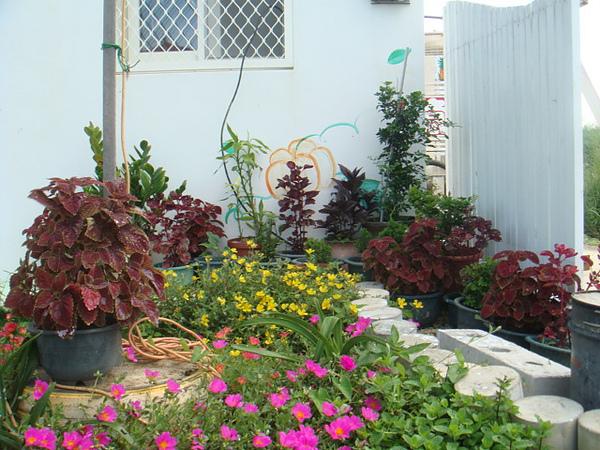 溫馨小屋小花園