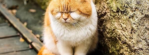 FB橫幅-貓咪.jpg