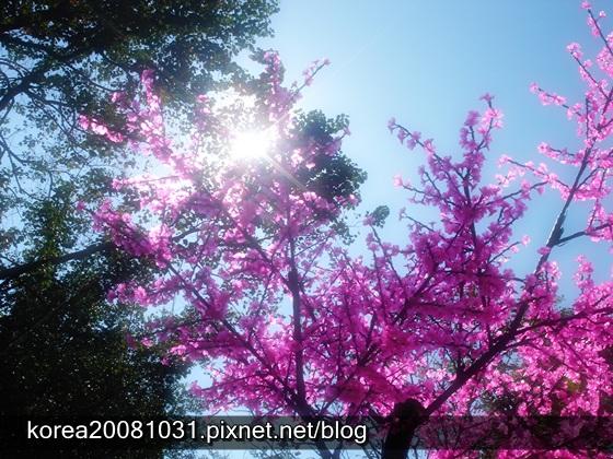 裝置櫻花樹