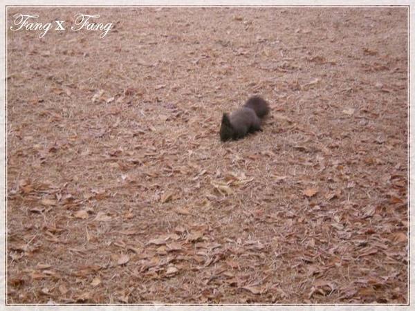 處處有松鼠