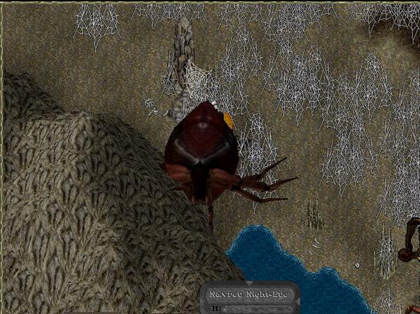 翻肚的大紅蜘蛛.jpg