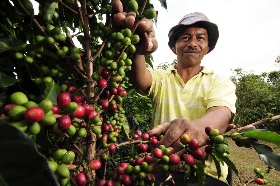 巴西咖啡1