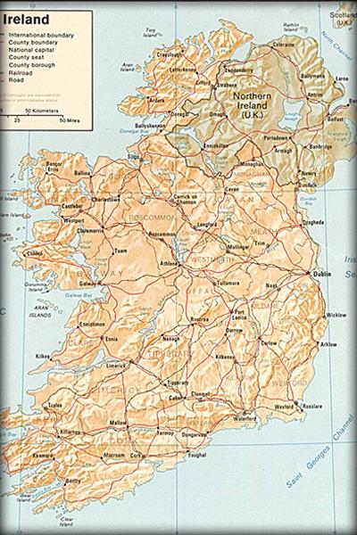 愛爾蘭薔薇