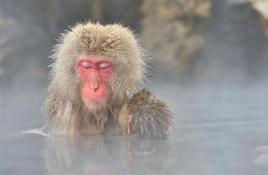 猴子閉目.jpg