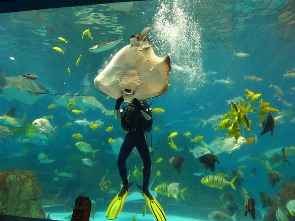 海底餵食秀