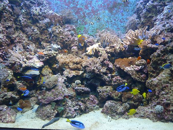 海洋生態館