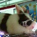 08戴墨鏡的巨兔