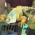 09蜥蜴是真的