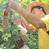 甲仙關山社區農村體驗