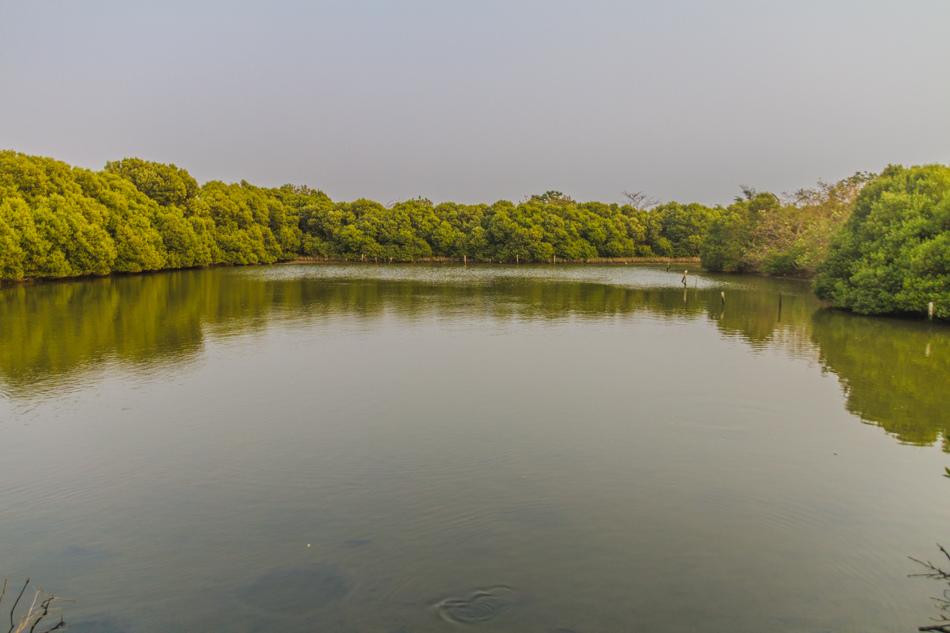 援中港濕地公園
