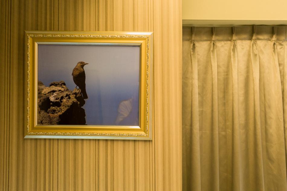 高雄旅遊-高雄住宿-鳥巢商旅